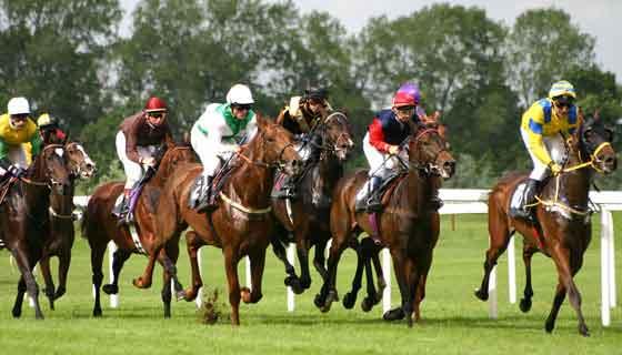 Recount of Triple Crown Winners in Thoroughbred Horse Racing